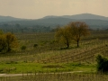 Dyjsko-moravská pahorkatina