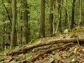 Středoevropské bazifilní teplomilné doubravy na andezitech v Komeňské vrchovině (SLT 2C - vysýchavá buková doubrava).