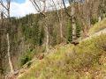 Horské lesy na úbočí Lysé hory.