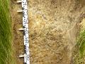 Pseudoglej luvický (PGl), lokalita:  Sovadina, Vítonická pahorkatina, PLO 37, SLT 3O